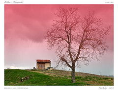 L'arbre (BerColly) Tags: sky house france tree nature clouds google flickr ciel nuages maison arbre auvergne puydedome bercolly