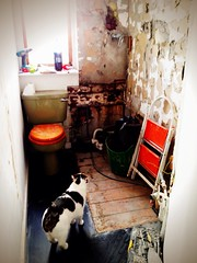 Eighty seven. Bathroom refit, day one (sarahjanequinn) Tags: home cat bathroom stan renovation iphone project365 uploaded:by=flickrmobile flickriosapp:filter=nofilter