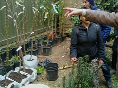 2013-04-27 16.50.31 (London Permaculture) Tags: urban tree london apple project orchard land kingscross permaculture pdc grafting graft permaculturedesigncourse londonorchardproject coreblimey alaraforestgarden