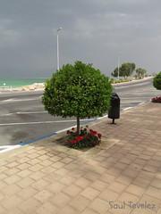 Arbol Enano (Saul Tevelez) Tags: naturaleza arbol israel desierto deadsea enano marmuerto neguev