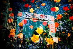 fringe city (fotobes) Tags: flowers red yellow lca xpro brighton tulips doubleexposure crossprocess banner fringe multipleexposure fujiprovia100 brightonfringe