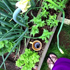 Good Morning! (soupatraveler) Tags: work this back do there week urbangardener fromwhereistand thecameramen mortalmuses uploaded:by=flickrmobile flickriosapp:filter=nofilter themugchronicles ourcollectivebeginning