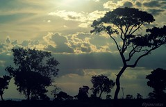 Entardecer campestre  <<<>>> Sunset country (Opimentas) Tags: sunset brazil sun verde green sol nature brasil angel landscape flickr photos tag natureza country go may sunsets tags paisagem prdosol campo wikipedia bento abs maio ops gois entardecer campestre pimenta wikimedia onofre flickrphoto naturesfinest 2013 wikipdia sunsetflickr wikimdia opimentas bhto prdosolflickr maio2013 prdosolcampestre