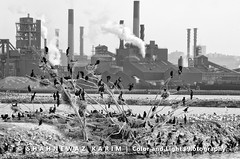 Decadence of progress (Neerod [ www.colorandlightphotography.com ]) Tags: life toronto industry scale birds death factory view earth many seagull smoke large pollution production spectators avian factories thousands kalim viewers
