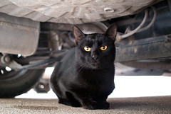 Black cat with orange eyes under a car (Ivan Radic) Tags: nikonv1 nikon1v1 n1v1 nikkor185mmf18 nikon185mmf18 18518 cat 185 f18 blurrybackground bokeh verschwommenerhintergrund unscharferhintergrund wideopenaperture offenblende offeneblende blackcat orangeeyes underacar schwarzekatze orangefarbeneaugen unterdemauto katze feline nikon csc evil ilc mirrorless spiegellos systemkamera systemcamera nikon1nikkor185mmf18 standardprime normalbrennweite primelens festbrennweite fixbrennweite fixfocallength ivanradic