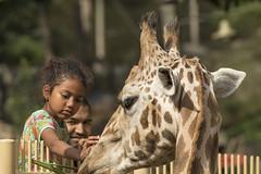 Giraf - Ouwehands (Jan de Neijs Photography) Tags: giraf ouwehands ouwehandsdierenpark rhenen dierentuin zoo tamron150600 tamron