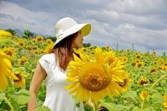 Be a sunflower (tez-guitar) Tags: lady sunflower summer flower blossoms bloom yellow green pentax pentaxart petal girl woman sky