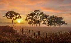 Never again (zebedee1971) Tags: landscape sun sunrise light orange yellow trees farm farmland fence dawn fog mist serene grass cloud paddock land natureandnothingelse
