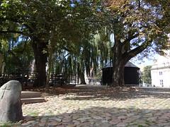 Lneburg (anders.l1) Tags: trauerweide lneburg stone pflasterstein tree