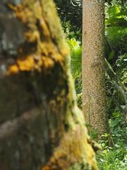 P9270089 (tonkonogov) Tags: indonesia bali ubud