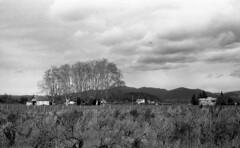 8388.Vines (Greg.photographie) Tags: nikon nikonfe nikkor 50mm f18 film analog polypan f50 ilford id11 vines cuers noiretblanc blackandwhite bw