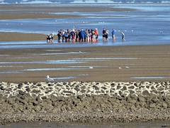 Baltrum, a guided mudflathike (Alta alatis patent) Tags: baltrum guide hike mudflat group wetfeet explanation