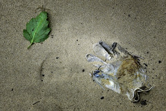 London_DSC5335F (JPPimenta) Tags: the glove beach river thames leaf color art artistic street photgraphy