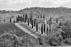 [explore] Da qualche parte nel Chianti (Matteo Liberati) Tags: chianti chiantisenese italia italy toscana tuscany volpaia colline hill hills explore flickrexplored explored
