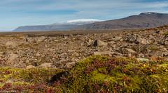 Langjkull (holger.torp) Tags: langjkull glacier gletcher mountain moss ice snow cold autumn fall colours