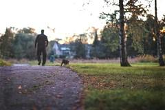 Evening walk with BFF (Jani M) Tags: man dog walking park sunset evening autumn fall blur