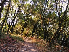A trail on Taylor Mountain in Sonoma County, California (harminder dhesi photography) Tags: bayarea norcal california santarosa sonomacounty sonoma summer enjoying view trail hiking park trees nature landscape snapseed vscocam vsco