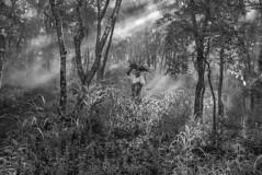 Collecting-Firewood,-Tanzania-2015