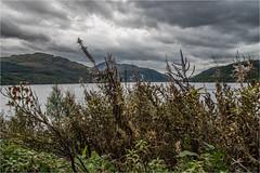 Loch Lomond, Scottish Highlands (IzabelaWinter) Tags: loch lomond highlands scotland