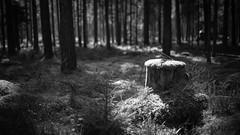 20160924_Leica_MP_2252_0108.jpg (RD B) Tags: stillleben holz leicasummiluxm35mmf14asph baum fotography leicamptyp240 wald nature timber ehingen bayern germany de
