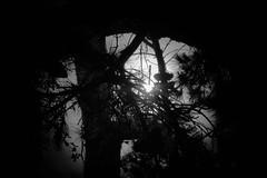 Contra luz (Cris Ima) Tags: contraluz contra luz blanco negro black paisaje via naturaleza monocromatico