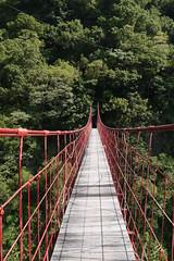 mysterious way  @ Taitung, Taiwan / (Jia  ) Tags:         taiwan taitung suspensionbridge bridge green tree red gf2 panasonic  outdoor