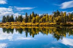 Fall Folliage at Oxbow (Wycpl) Tags: reflection wyoming grandtetonnationalpark oxbowbend