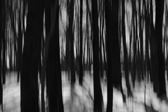 come closer (brianephotos) Tags: trees sky blackandwhite snow blur woods egan icm intentionalcameramovement
