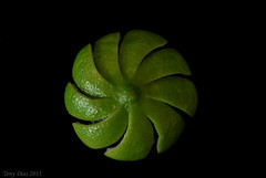 Lime session (Tony Dias 7) Tags: black macro green round lime