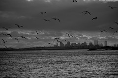 Destination Downtown (7Neretva) Tags: ocean bw birds boston skyline clouds ma nikon seagull north ne atlantic shore ripples swampscott d7000