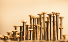 Pin-head City (rosejones1uk) Tags: macro golden pinheads
