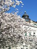 Washington Cherry blossoms 2013 wi…