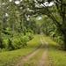 Bel percorso tra i boschi del lago Arenal