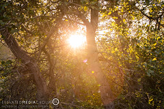 Naturescapes-11 (Elevated Media Group) Tags: california ca wood sunset summer sun lake nature grass set canon silver studio landscape spring media horizon group flare hesperia elevated dennis silverwood t3i dns 600d arriaza