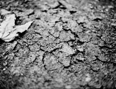 Cracked (Pablo Saltiveri) Tags: bw 645 kodak bokeh 400tx contax butter 80mm