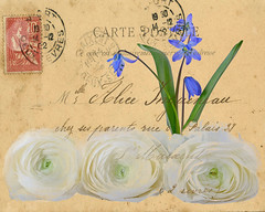 Sending Wishes... (njk1951) Tags: macro texture spring postcard ranunculus scilla springflowers springwishes tatot blinkagain sendingwishes creativephotocafe