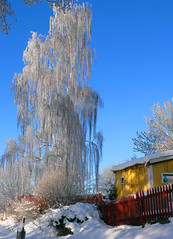 Silver tree, Stockholm (fam_nordstrom) Tags: blue winter sky snow tree ice yellow azul silver arbol is vinter sweden stockholm sdermalm nieve cottage january himmel enero cielo plata invierno birch bjrk sverige silvery sn hielo estocolmo gul amarilla trd suecia januari cabaa stuga tanto tantolunden hornstull bl plateado rstaviken abedul 2013 silvrig
