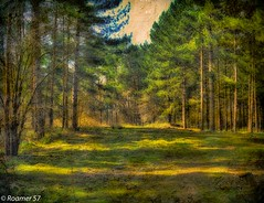 The Clearing (Roamer 57 (Not Around Much)) Tags: trees texture nature forest woods nikon clearing tatot roamer57 galleryoffantasticshots