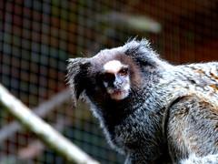 Toca da Raposa - SP (Rafael Magdalena) Tags: monkey sp xingu indians indios tocadaraposa kuikuros