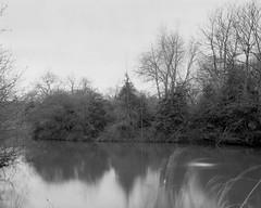 Battersea Park, London (Paul David Kemp) Tags: blackandwhite film landscape blackwhite 4x5 rodinal largeformat 135mm foma 5x4 fieldcamera wista wista45 largeformatbw largeformatfomapan