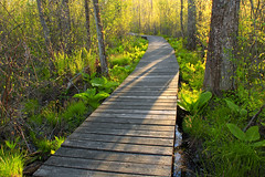 Swamp Walk (1) (Nicholas_T) Tags: bridge trees plants nature forest spring pennsylvania trail creativecommons vegetation boardwalk lehighvalley wetland understory bearswamp northamptoncounty uppermountbetheltownship bearswampcountypark