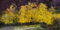 """Autumn Rising"" By Robert Park  http://www.robert-park.com (Robert Park Photography) Tags: travel vegas trees newyork tree art racetrack wonder landscape photography nationalpark gallery photographer natural lasvegas nevada fineart soho galleries national valley collectors naturalwonders fineartphotography macrophotography lasvegasstrip striplas thepalazzo lasvegasshopping awesometrees robertpark theshoppesatthepalazzo ""flickraward photographycollectors mygearandmebronze flickrbronzetrophygroup tplringexcellence photocontesttnc12 robertbpark naturalwondersgallery theshoppesatthepalazzonevadagallery uploaded:by=flickrmobile httpwwwrobertparkcom robertparkcom flickriosapp:filter=nofilter"