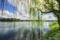 A willow branch on the Ticino (Tizi@no56 (painting with light)) Tags: trees sky panorama house alberi clouds reflections river landscape nuvole branch fiume case willow cielo ramo riflessi salice d7100 sigma816mm nikond7100