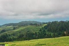 Redwood Green Graze (DoctorLove415) Tags: life green colors beautiful beauty northerncalifornia relax quiet peace scenic peaceful serenity selfreflection serene redwoods norcal refreshing humboldtcounty beautifulclouds grazing soothing greenhills northcoast godscountry mattoleroad lostcoast kingrange mattole beautifulsky peaceofmind northerncaliforniacoast northstate redwoodcoast cattleranch norcalcoast cattlegrazing grazingcattle humboldtcountycoast norcalphotographers kingmountainsrange