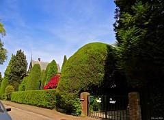 Graaf Wickmanlaan_01489-imp (John van Rhijn) Tags: trees fence bomen bussum noordholland hek gooi sonydschx200v johnvanrhijn graafwichmanlaan