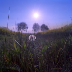 evening view of a mouse (mniesemann) Tags: sunset sun green colors evening abend sonnenuntergang himmel hasselblad gras grn blau sonne bume swc lwenzahn pusteblume rapsfelder 500px ifttt