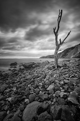 tree (blende einspunktacht) Tags: sea tree nature canon landscape see landschaft ostsee baum