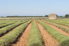 Lanvanda (Mauro_Amoroso) Tags: sky panorama france green nature landscape nikon purple d2x lavander francia paesaggio nationalgeographic provenza lavanda natgeo d600 nital valensole nikonlandscape nikonitalia amorosomauroadventures mauroamorosoadventures