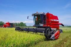 Massey-Ferguson rice harvester-Colombia (Dan-paul) Tags: masseyferguson rice colombia harvester tolima