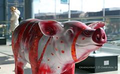The Pig Parade (9O6A0298_1) (Wonder Westie) Tags: sculpture publicart art chq ifsc dublin ireland eire ie crabhin pigsonparade httppigsonparadeie canoneos5dmarkiii canoneos canon dublin1 d1 sencrabhin